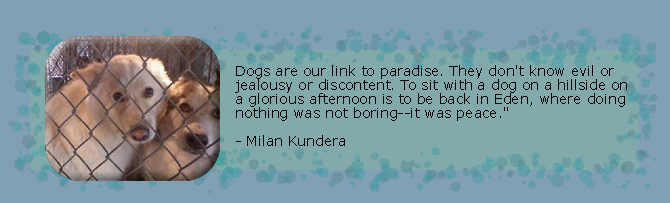 Dogs are our link to paradise.